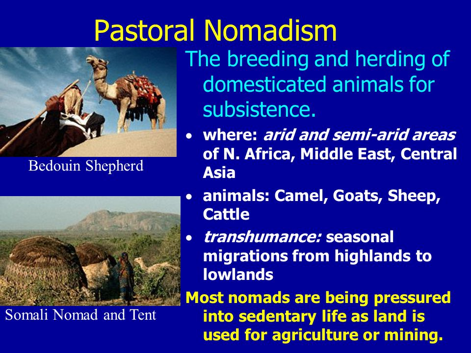 Pastoral Nomadism The breeding and herding of domesticated animals for subsistence.