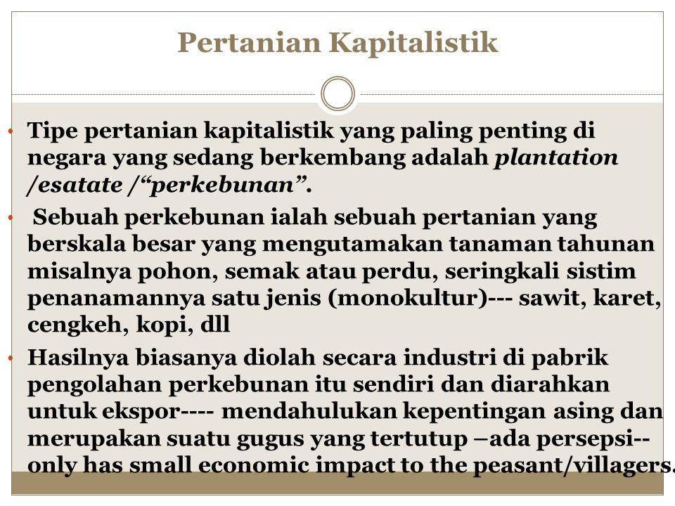 Pertanian Kapitalistik