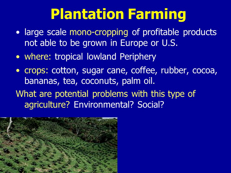 Plantation Farming large scale mono-cropping of profitable products not able to be grown in Europe or U.S.