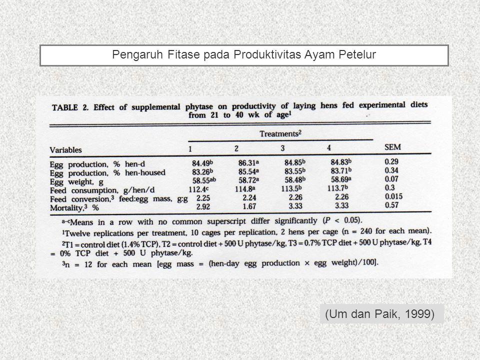 Pengaruh Fitase pada Produktivitas Ayam Petelur