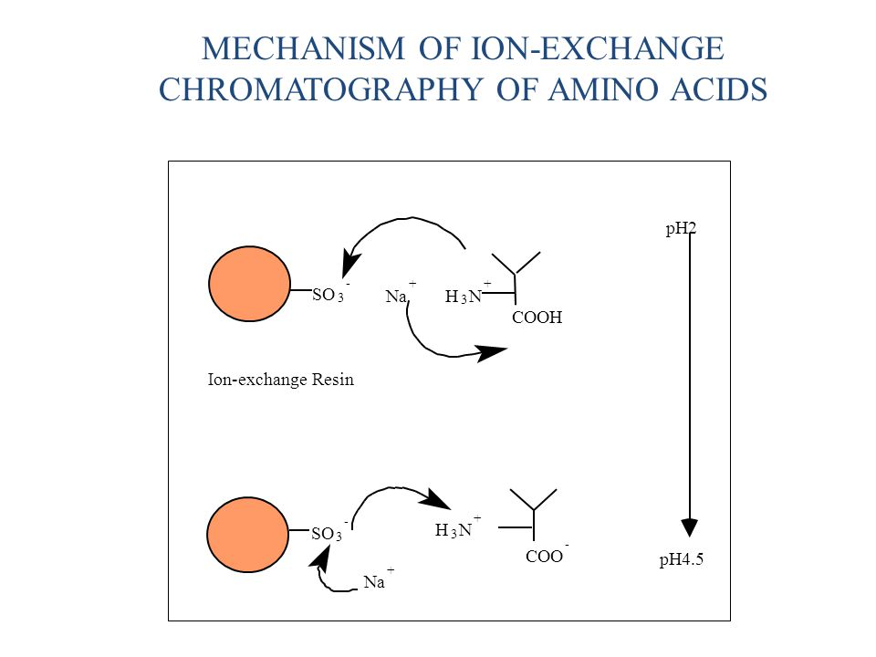 MECHANISM OF ION-EXCHANGE CHROMATOGRAPHY OF AMINO ACIDS