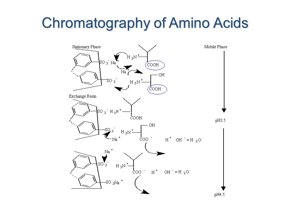chromatography and the identification of amino acids Separation and determination of the amino acids by ion exchange column chromatography applying postcolumn derivatization j chromatography, hplc, amino acids.