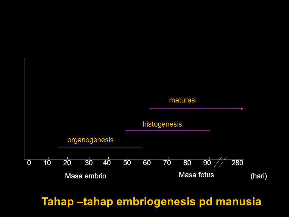 Tahap –tahap embriogenesis pd manusia
