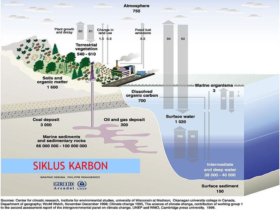 SIKLUS KARBON 13