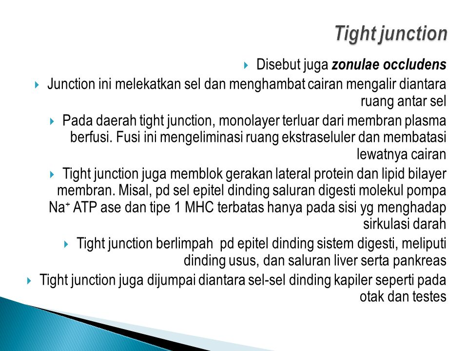 Tight junction Disebut juga zonulae occludens