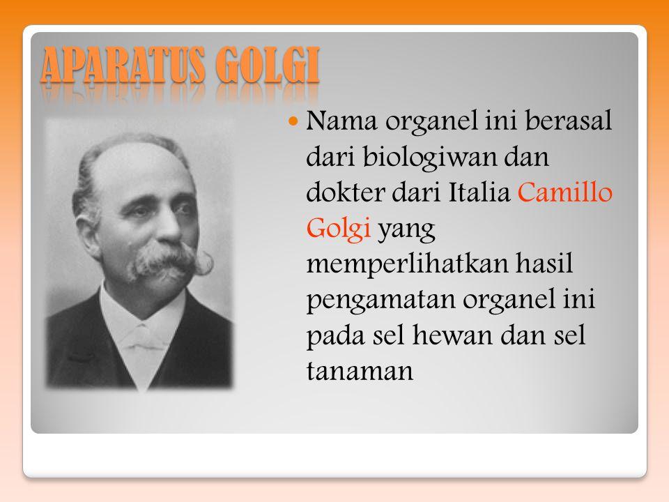APARATUS GOLGI