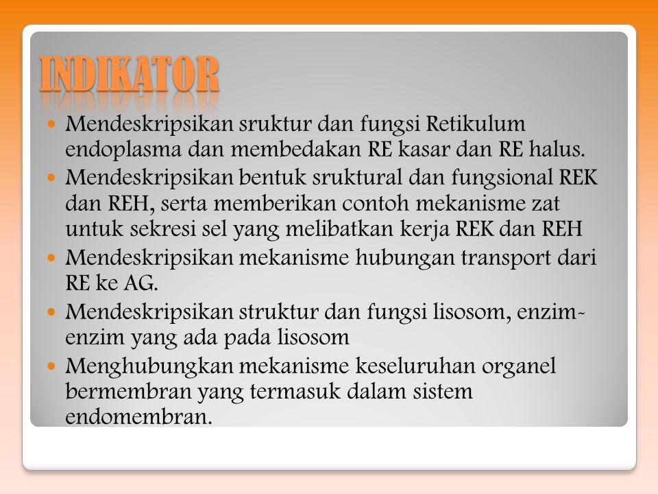 INDIKATOR Mendeskripsikan sruktur dan fungsi Retikulum endoplasma dan membedakan RE kasar dan RE halus.