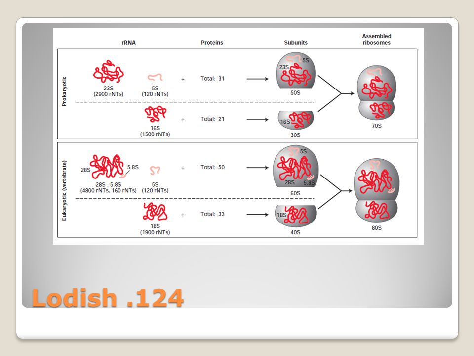 Lodish .124