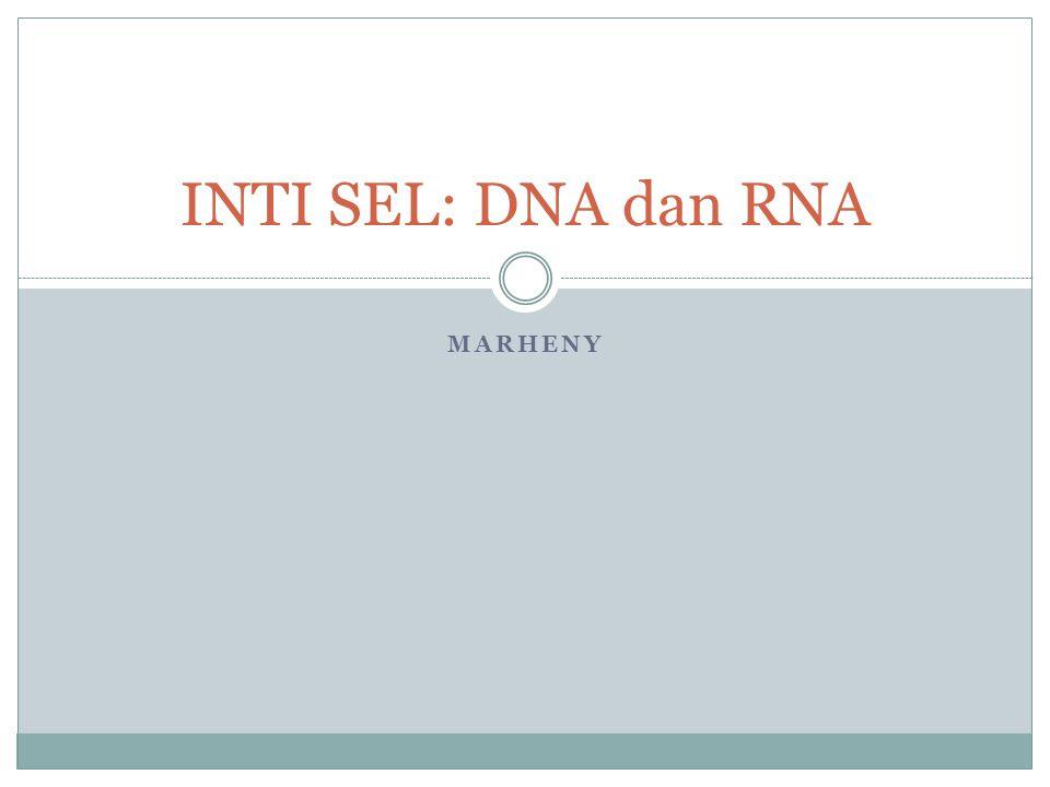 INTI SEL: DNA dan RNA MARHENY