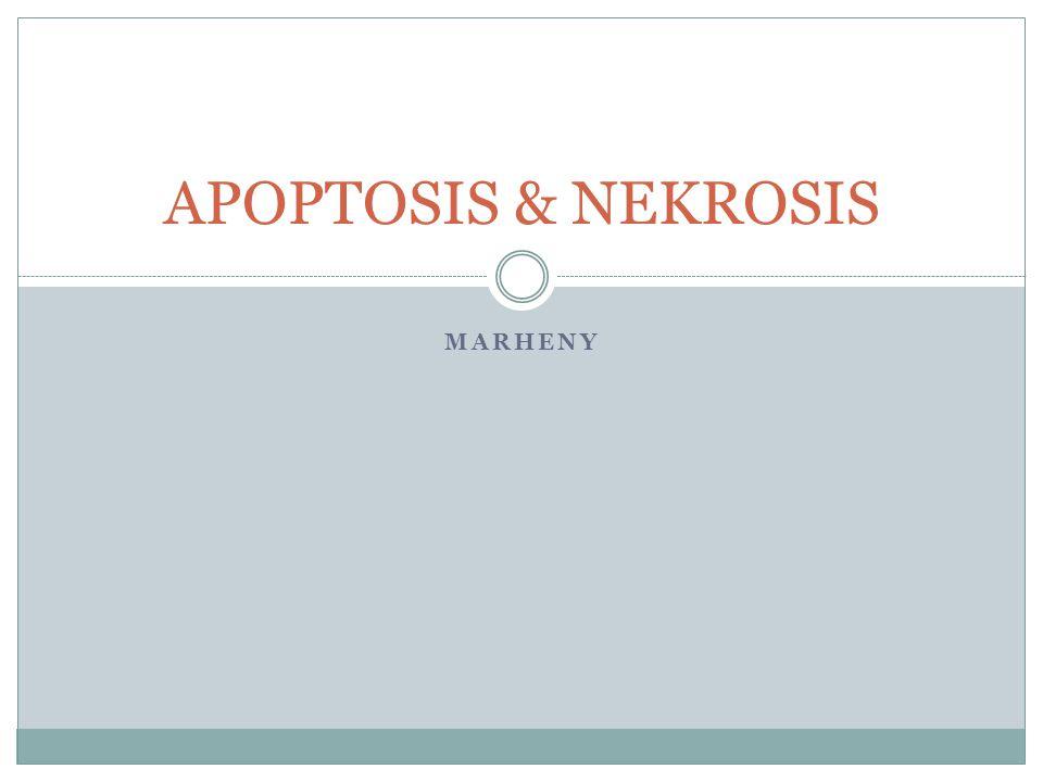 APOPTOSIS & NEKROSIS MARHENY