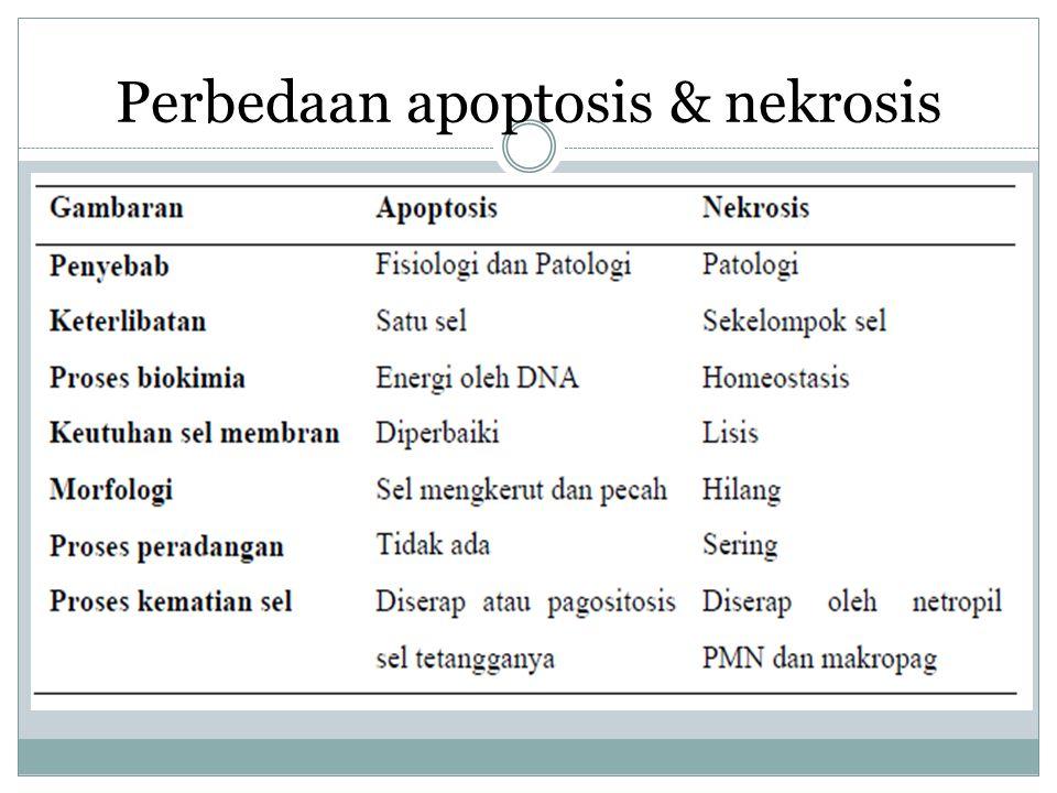 Perbedaan apoptosis & nekrosis