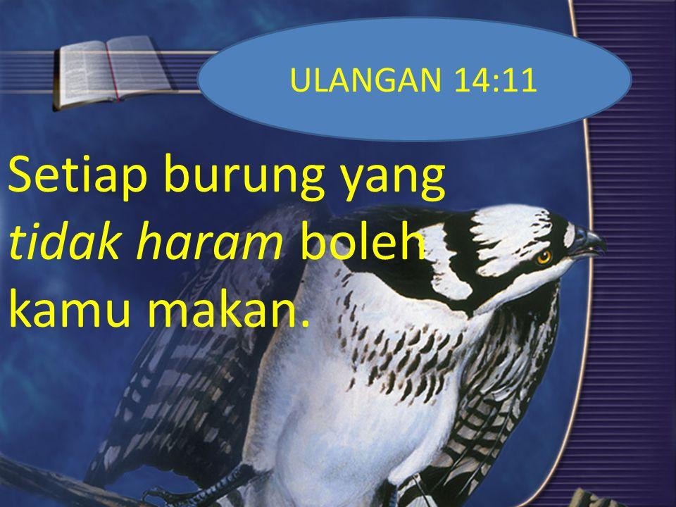 Setiap burung yang tidak haram boleh kamu makan.