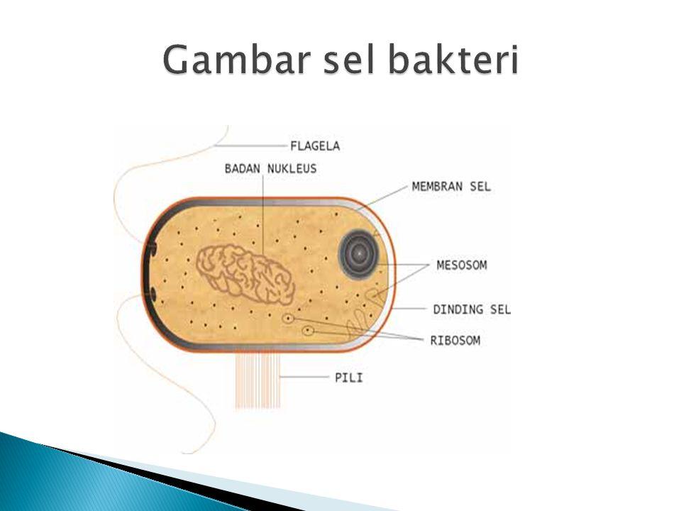 Gambar sel bakteri