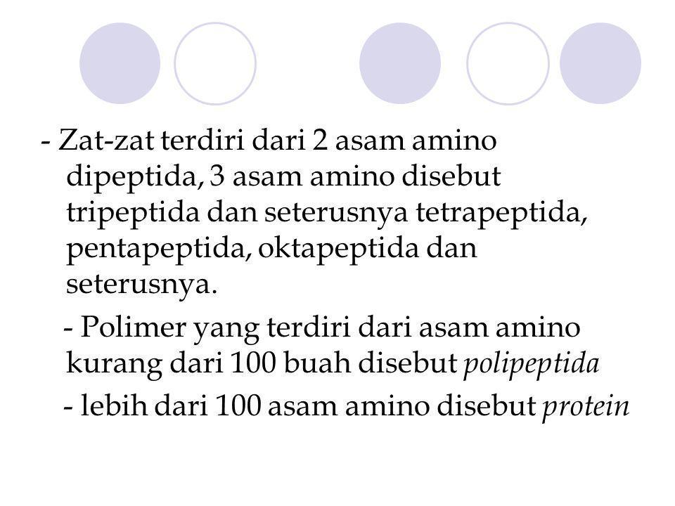 - Zat-zat terdiri dari 2 asam amino dipeptida, 3 asam amino disebut tripeptida dan seterusnya tetrapeptida, pentapeptida, oktapeptida dan seterusnya.