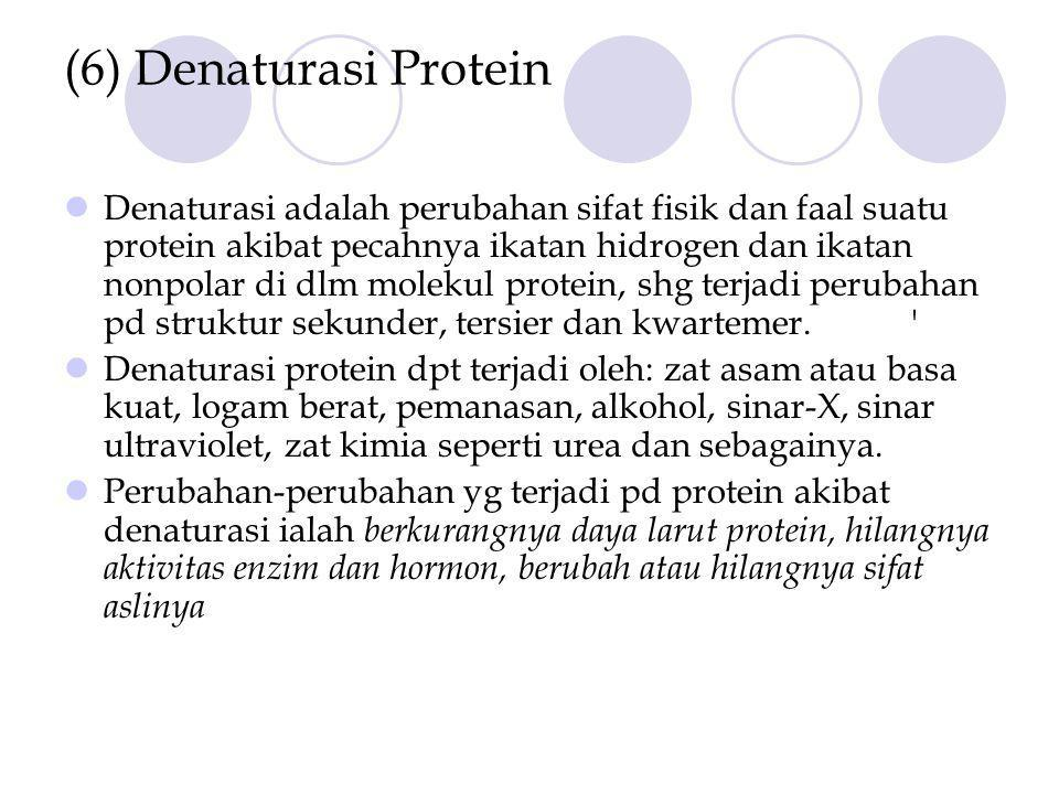 (6) Denaturasi Protein