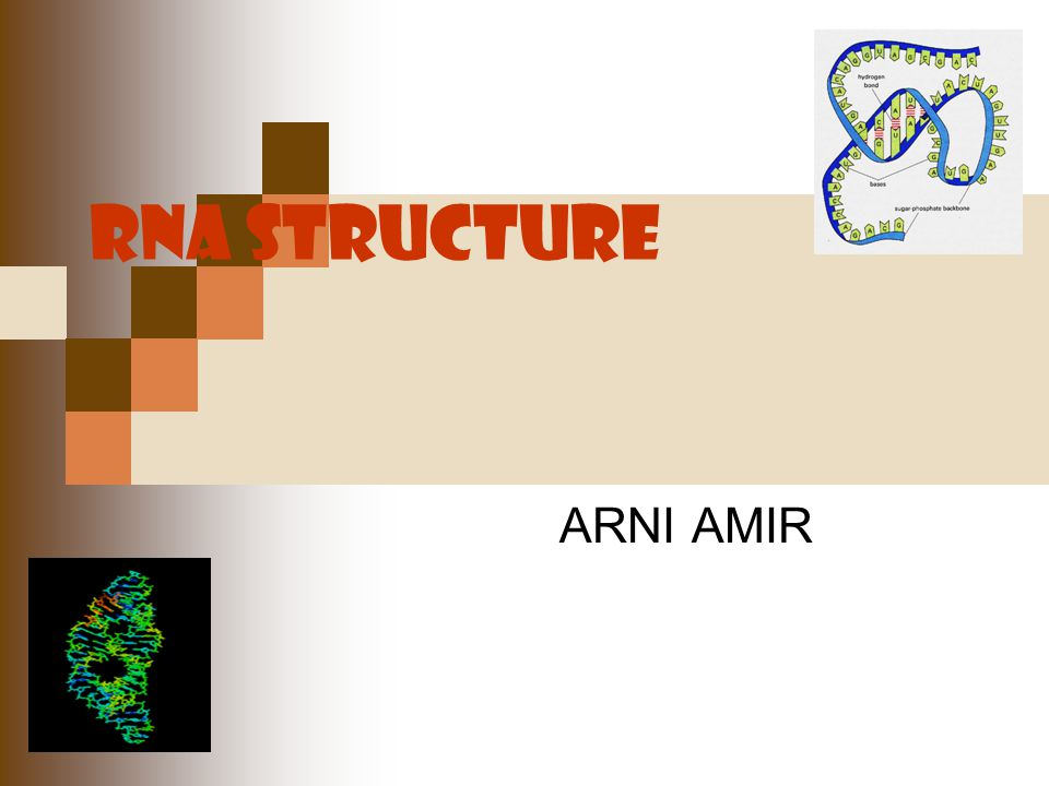 RNA STRUCTURE ARNI AMIR