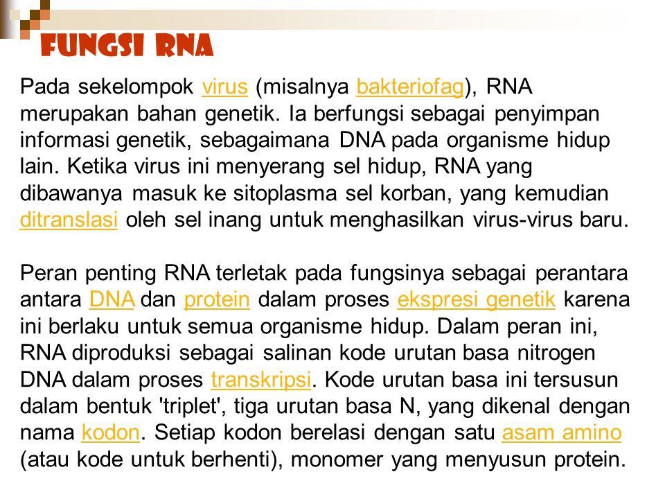 Fungsi RNA