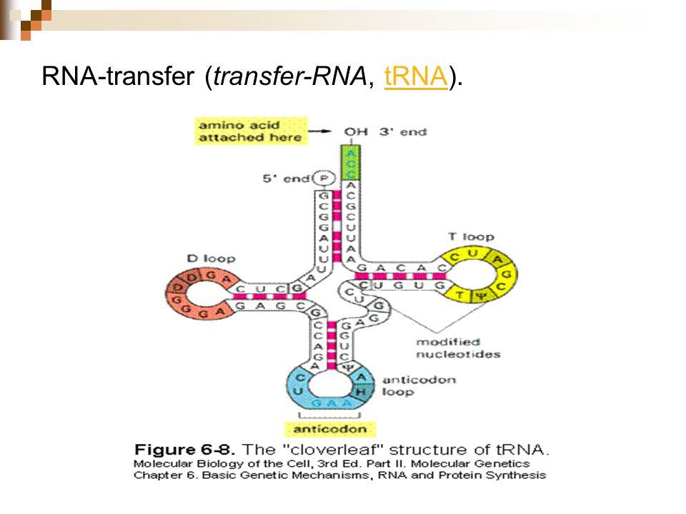 RNA-transfer (transfer-RNA, tRNA).