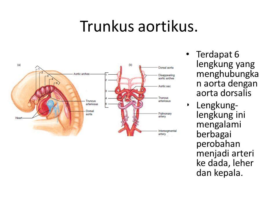 Trunkus aortikus. Terdapat 6 lengkung yang menghubungkan aorta dengan aorta dorsalis.