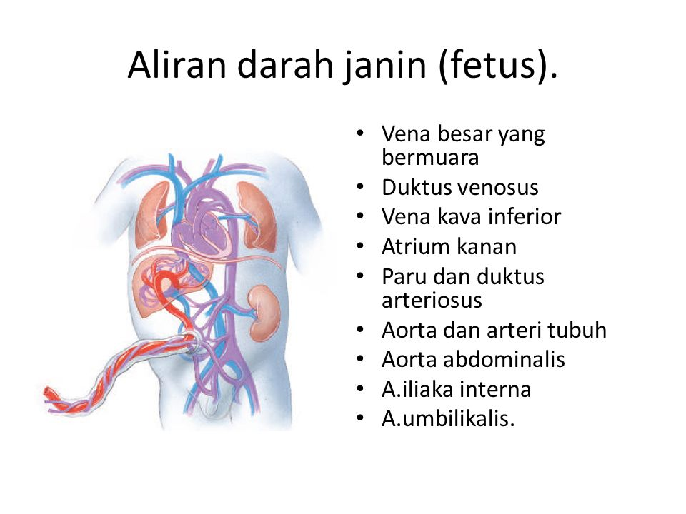 Aliran darah janin (fetus).