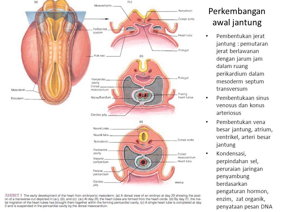 Erfreut Augenarterie Anatomie Zeitgenössisch - Anatomie Ideen ...