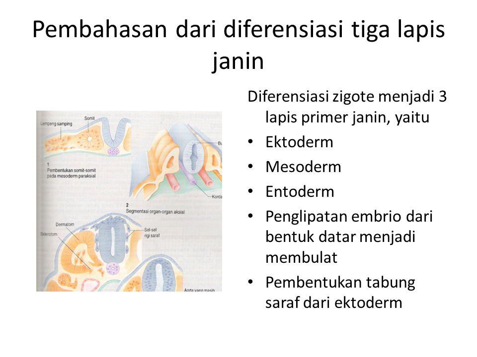 Pembahasan dari diferensiasi tiga lapis janin