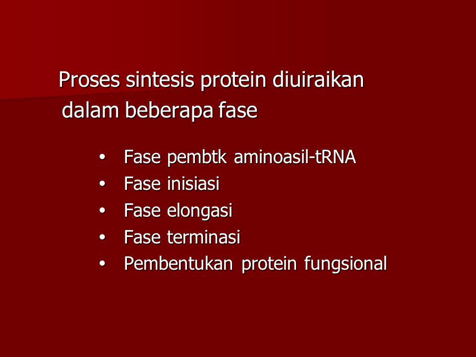 dalam beberapa fase  Fase pembtk aminoasil-tRNA  Fase inisiasi