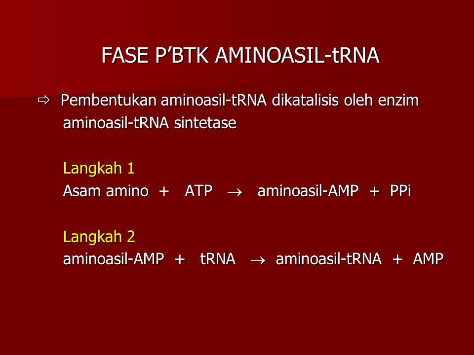FASE P'BTK AMINOASIL-tRNA