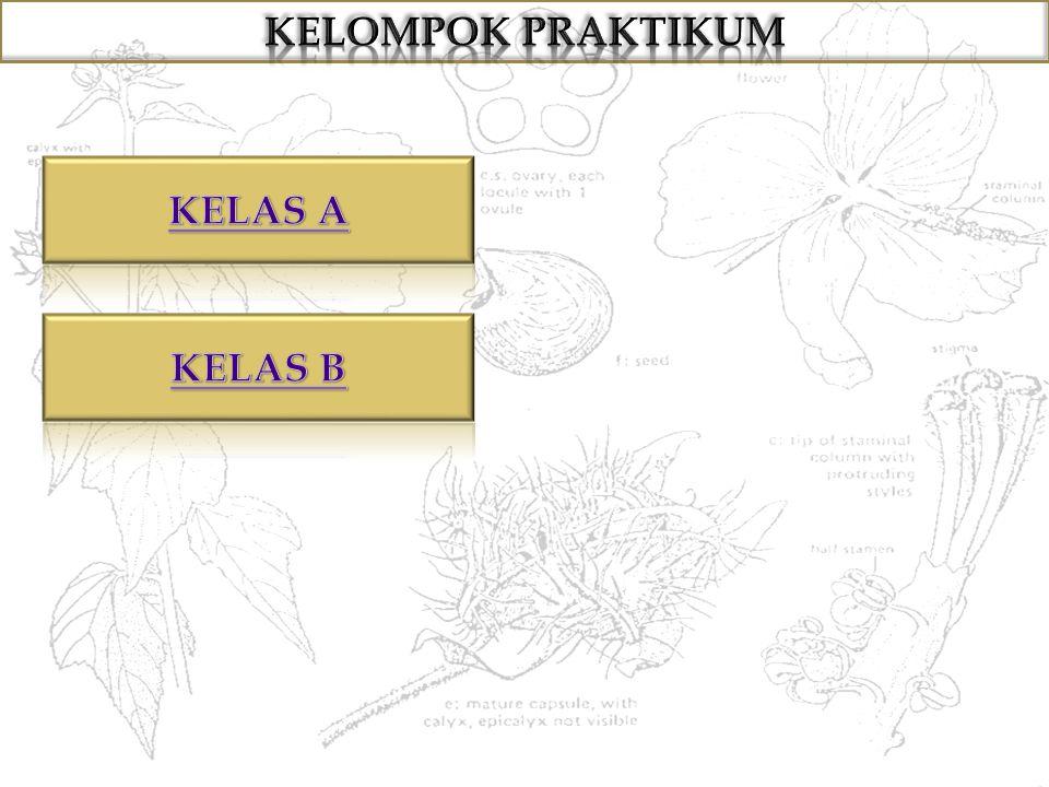 KELOMPOK PRAKTIKUM KELAS A KELAS B