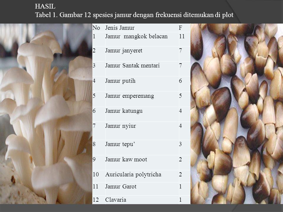 Tabel 1. Gambar 12 spesies jamur dengan frekuensi ditemukan di plot