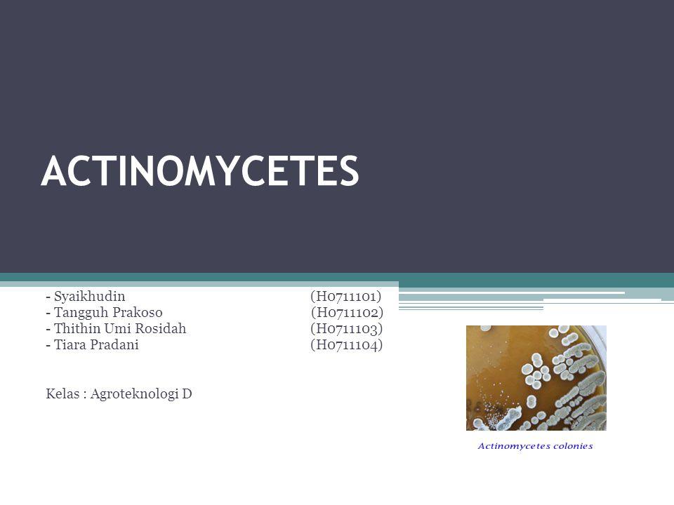 ACTINOMYCETES - Syaikhudin (H0711101) - Tangguh Prakoso (H0711102)
