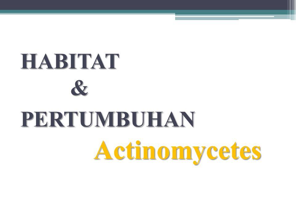 HABITAT & PERTUMBUHAN Actinomycetes