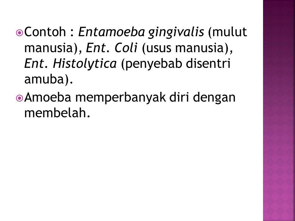 Contoh : Entamoeba gingivalis (mulut manusia), Ent