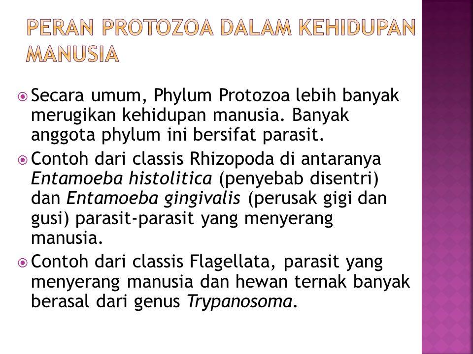 Peran protozoa dalam kehidupan manusia
