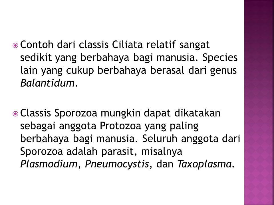 Contoh dari classis Ciliata relatif sangat sedikit yang berbahaya bagi manusia. Species lain yang cukup berbahaya berasal dari genus Balantidum.