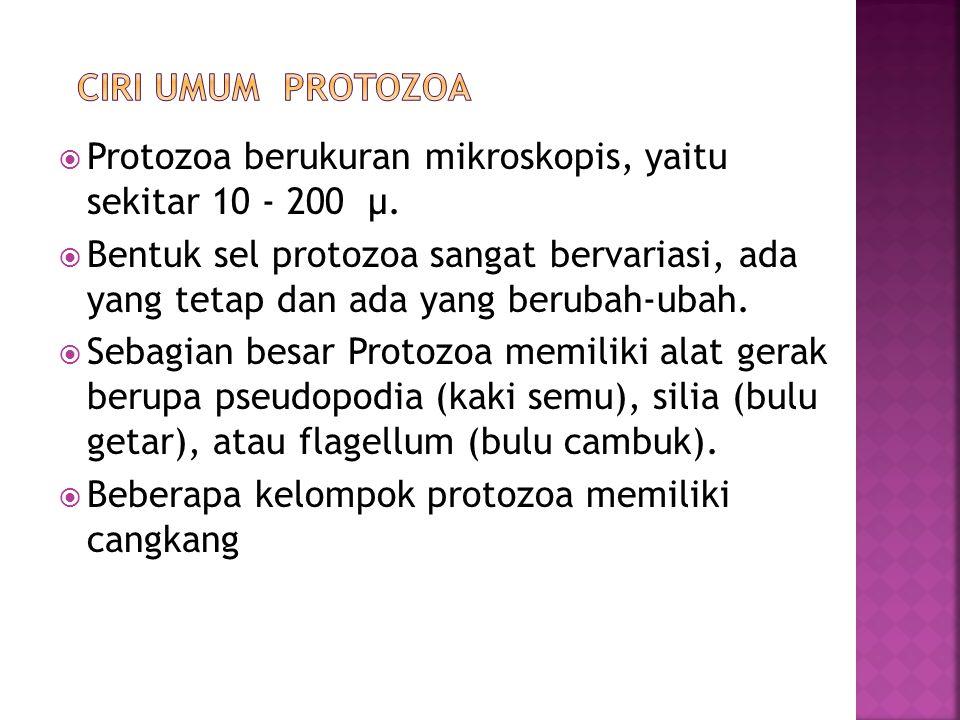 CIRI UMUM PROTOZOA Protozoa berukuran mikroskopis, yaitu sekitar 10 - 200 µ.