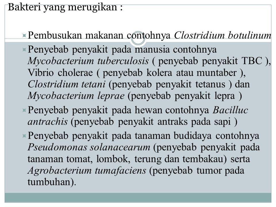 Pembusukan makanan contohnya Clostridium botulinum