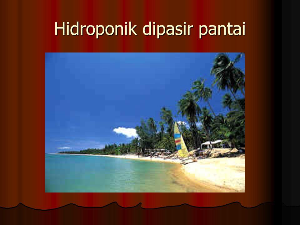 Hidroponik dipasir pantai
