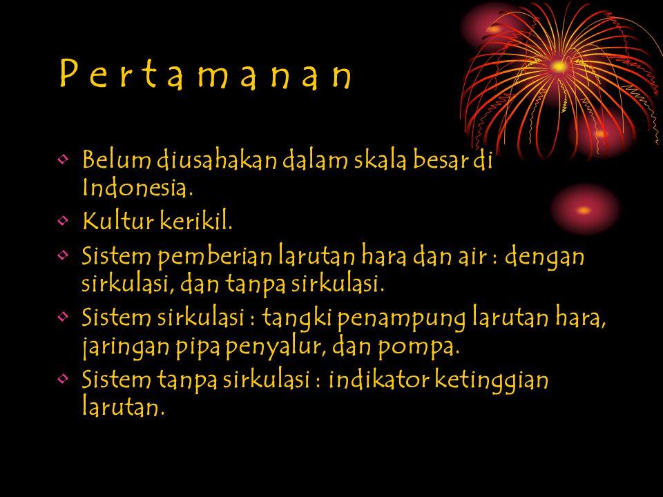 P e r t a m a n a n Belum diusahakan dalam skala besar di Indonesia.