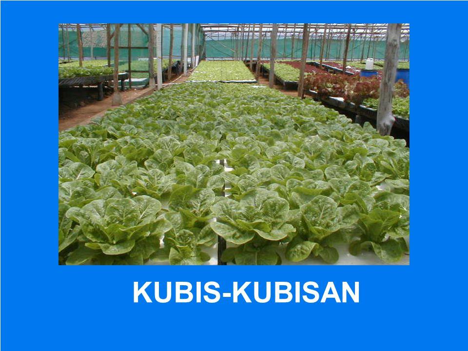 KUBIS-KUBISAN