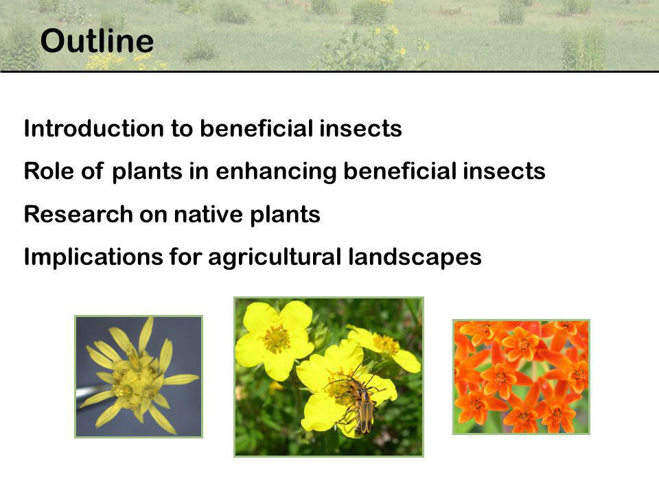 Outline Introduction to beneficial insects