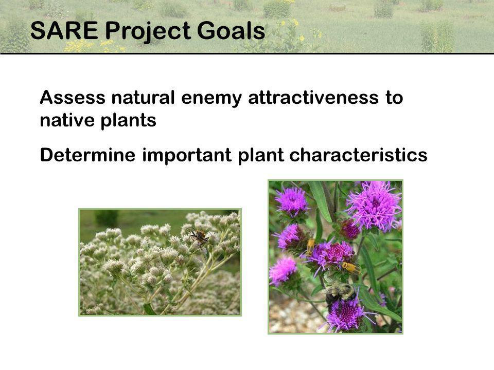 SARE Project Goals Assess natural enemy attractiveness to native plants. Determine important plant characteristics.