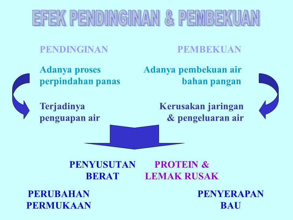 EFEK PENDINGINAN & PEMBEKUAN