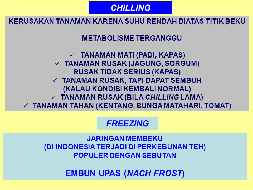 CHILLING FREEZING EMBUN UPAS (NACH FROST)
