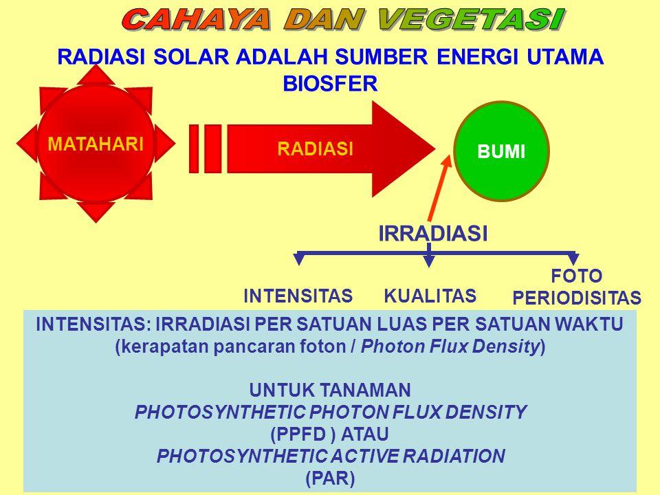 CAHAYA DAN VEGETASI RADIASI SOLAR ADALAH SUMBER ENERGI UTAMA BIOSFER