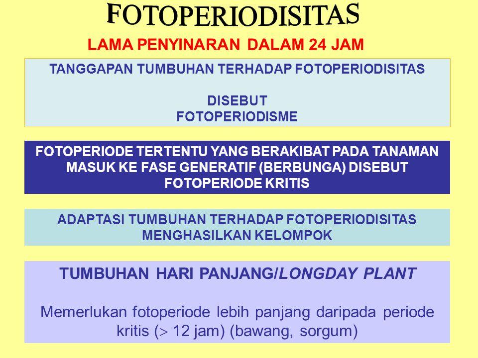 FOTOPERIODISITAS LAMA PENYINARAN DALAM 24 JAM