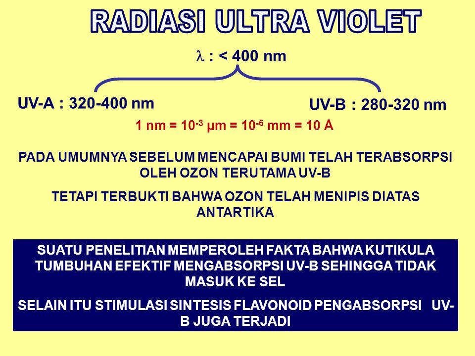 RADIASI ULTRA VIOLET  : < 400 nm UV-A : 320-400 nm