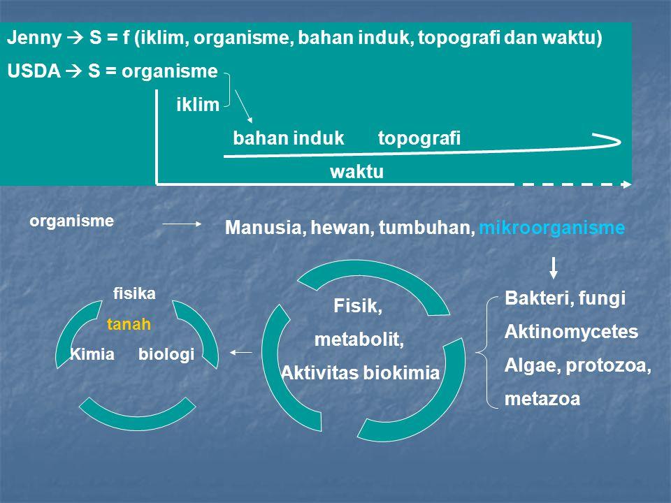 Fisik, metabolit, Aktivitas biokimia