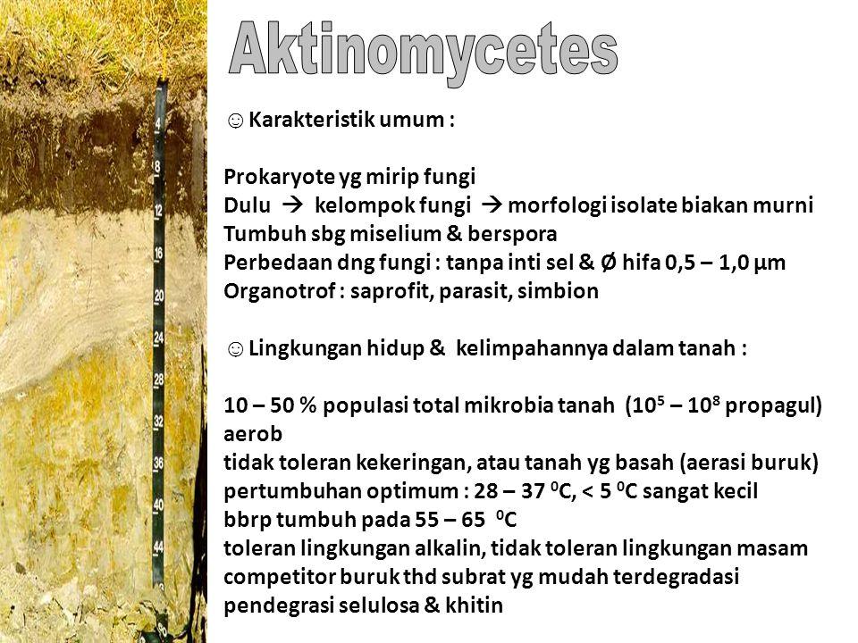 Aktinomycetes ☺Karakteristik umum : Prokaryote yg mirip fungi