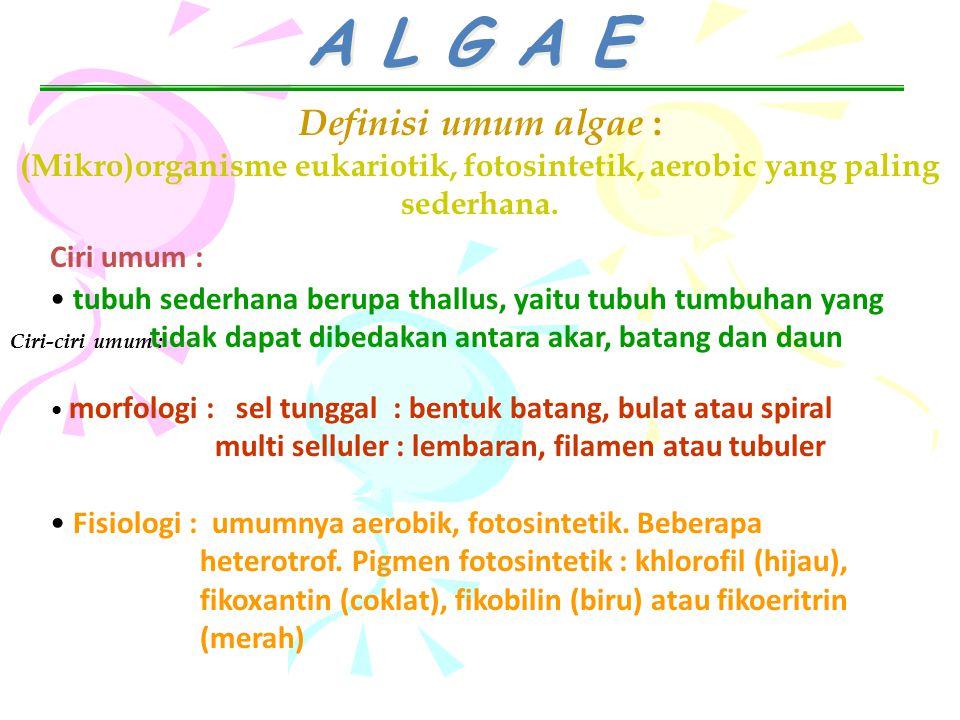 A L G A E Definisi umum algae :